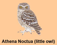 Athens gets its   own owl!